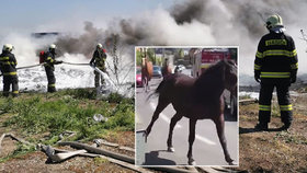 Masivní požár zahalil metropoli kouřem: Koně šílení děsem se řítili mezi houkajícími cisternami a auty.
