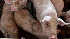 Cena masa klesla kvůli zboží v akcích, tvrdí chovatelé (ilustrační foto)