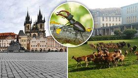 Film o pražské přírodě