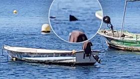 U španělského pobřeží natočili čtyřmetrového žraloka.