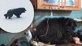 Pejska Černiše zachránili po dvou měsících, které strávil na zamrzlém moři. Čekal na páníčka, jenž se nikdy nevrátil.