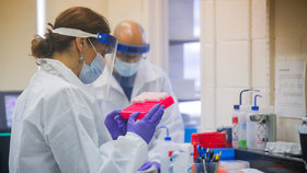 Výzkum koronaviru: Laboratoř v USA
