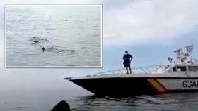 """U španělského pobřeží se pohybuje osmimetrový """"monstr"""" žralok."""