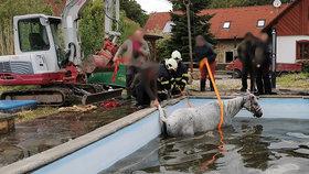 Smutná událost u Hořic: Po pádu do bazénu zemřel kůň.