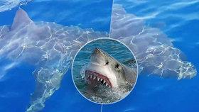 Obřího žraloka bílého natočili u italského ostrova Lampedusa.