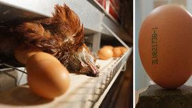 Podvod s vejci: Reportéři ČT odhalili, že drůbežárny vydávají klecová vejce za ta z podestýlky