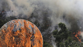 Deštný prales v ohrožení! Aktivisté varují, že v Amazonii bude hořet jako loni.