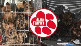 Policie obvinila chovatelku psů ze Zlatých Hor z týrání zvířat. Hrozí jí až pět let