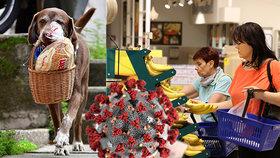 V Kolumbii roznáší zákazníkům jídlo z místní večerky pes, usnadňuje tak lidem dodržování rozestupů