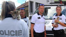Policisté zachránili ztracené kotě.