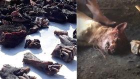 Odporné záběry z indického trhu: Na prodej jsou i opičí ruce.