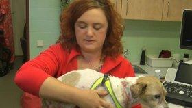 Veterinářka Markéta Janoušková ještě nikdy neviděla psa takto záměrné zřízeného.