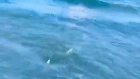 Policista mimo službu zachránil chlapce před žralokem na pláži Cocoa Beach.