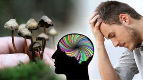 Čeští vědci budou zkoušet léčit depresi halucinogenem z lysohlávek.