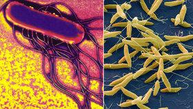 Salmonelóza a kampylobakterióza