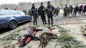 Myslivci během pandemie zastřelili více divočáků (ilustrační foto)