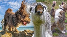 Smějící se koně i tančící kočky: Podívejte se na fotky ze soutěže o nejvtipnější foto domácích mazlíčků