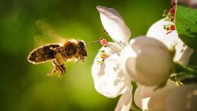Proti hmyzu bez chemie: Jak se zbavit otravných včel a komárů?