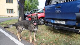 Policie pátrá v bydliště 7 let pohřešované Jany Paurové. Na místě pracuje i pes speciálně vycvičený na hledání mrtvol