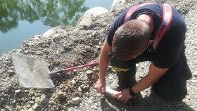 Do Bečvy unikla neznámá látka, uhynulo velké množství ryb. Situaci řešili hasiči z Olomouckého kraje
