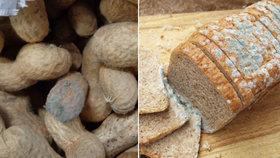 Aflatoxiny jsou nebezpečné plísňové jedy. Víte, jak se jim vyvarovat?