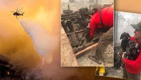 Požáry pustoší Kalifornii. Z ohnivého pekla se záchranářům podařilo vyprostit malé štěně.