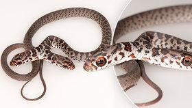 Dvouhlavý had se vylíhl na Floridě.