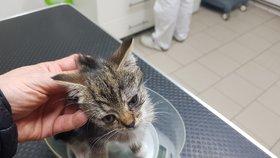 Koťátko nalezené v Hradci Králové