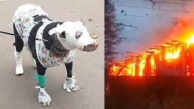 Březí čubička zachránila při požáru ruského hospicu čtyři lidské životy.