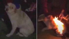 Děti v Rumunsku podpálily štěňátko.