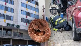 Šestiletá dívka, kterou v pátek uštkl v Jenštejně jedovatý had, byla propuštěna na standardní oddělení.
