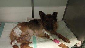 Zubožená zvířata budou potřebovat hodně péče a někteří i nákladnou léčbu