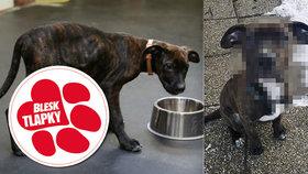Týrané štěně z pražských Kbel už není v útulku.