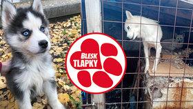 Má dohlížet na zákony, sama je porušuje: Ústecká strážnice drží psy ve výkalech a množí