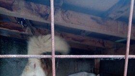V takovýchto podmínkách strážnice psy chová