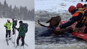 Záchranáři z mrazivé vody zachránili kobylu, která se propadla ledem.