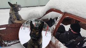 Policejní pes Matrix v akci
