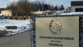 Areál státního podniku Mezinárodní testování drůbeže (MTD) v obci Ústrašice na Táborsku. Patří mezi velké chovy drůbeže, které veterináři prověří kvůli nálezu ptačí chřipky v nedaleké Dlouhé Lhotě. (25. 1. 2021)