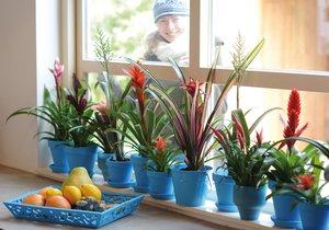 Bromélie dodají vašemu bytu exotickou atmosféru.