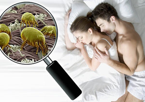 Za alergie mohou roztoči, kterým  v našich domovech poskytujeme ideální prostředí k životu.
