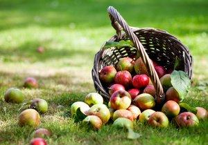 Na to, že jablka plánujete skladovat, musíte myslet už při sběru.