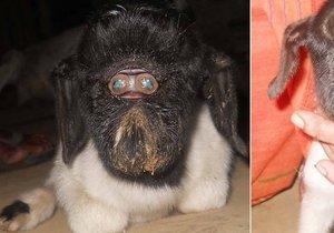 Jehně z Indie se narodilo s obličejovým defektem.