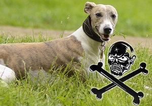 U Plzně někdo dává otrávené návnady: Podezření je na zakázaný karbofuran, uhynul pes i liška