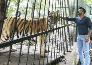 Tygr Osmanyho Laffity má nádor.