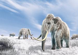 Mamuta se vědci chystají přivést k životu pomocí genové manipulace.