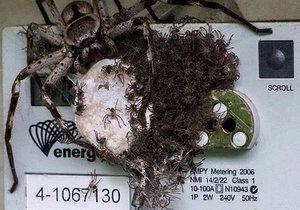 Majitele domku vyděsil obří pavouk s mláďaty na elektroměru.