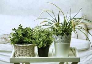 Po zimě potřebují vaše pokojovky více pozornosti. Pokud se o ně dobře postaráte, budou vám přes rok krásně kvést a růst.