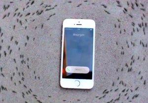Mravenci rotují kolem iPhonu. Vypadá to, že je telefon ovládá.