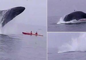 Velryba málem rozdrtila kajakáře.