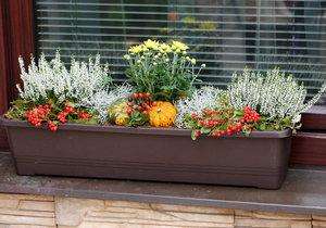 Zkombinujte třeba chryzantému s vřesem a libavkou poléhavou. Aranžmá pak můžete doplnit dekorativní tykví.
